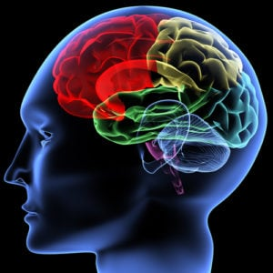 brain-thinking